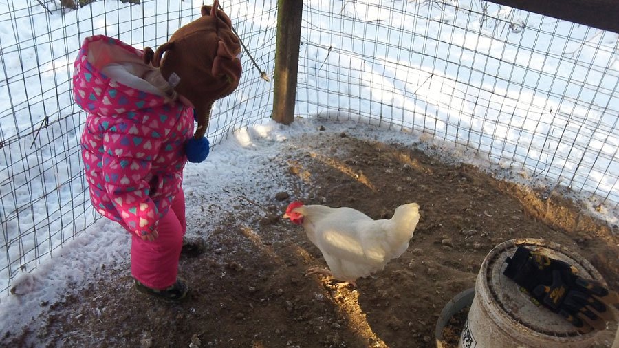 As you can see, she cocks her leg before kickin' a chicken. Can you see the fear in the chickens face?