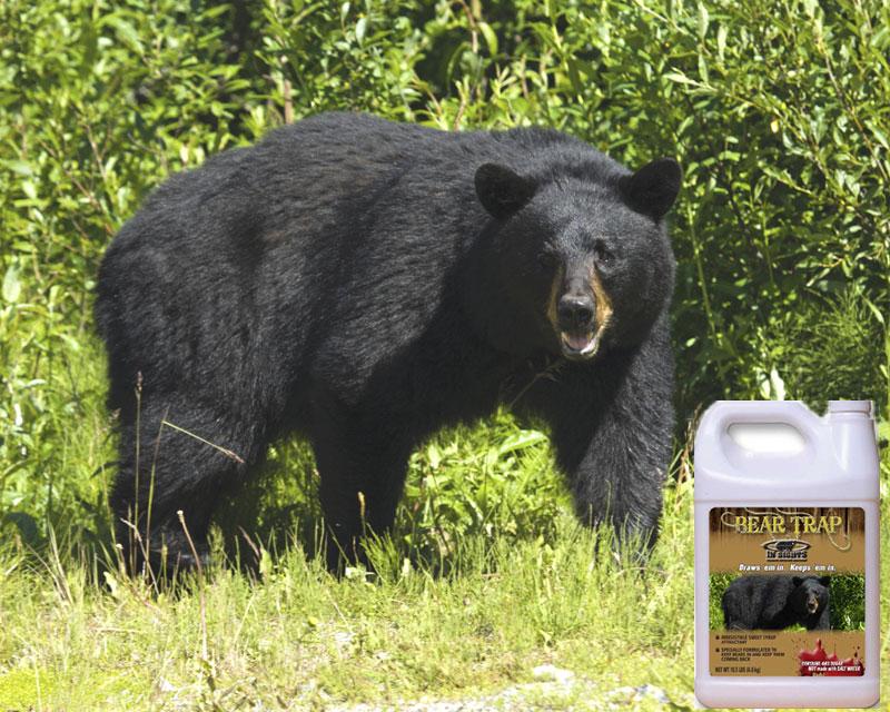 BEAR-TRAP-BEAR