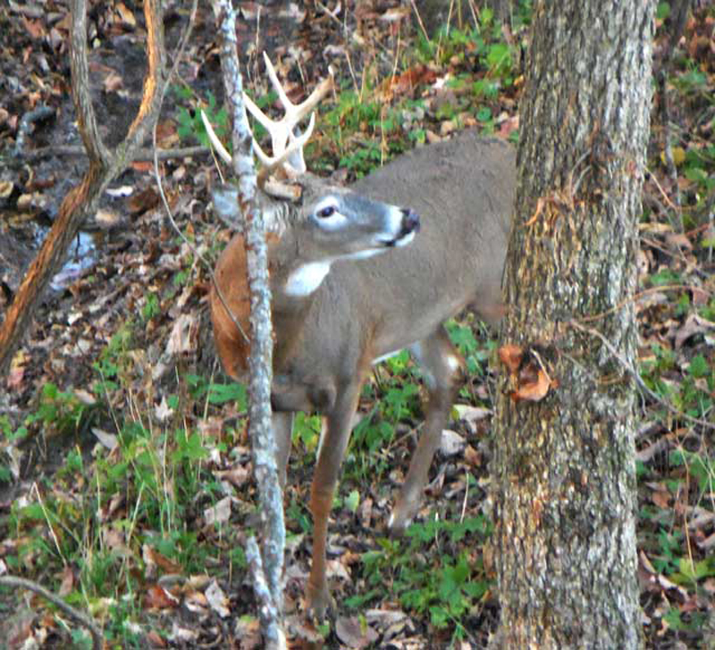 Treestands can be a deer hunters best friend and worst enemy. Hunting from trees is the most consistently successful method to tag game, but each year falls injure and kill hunters.