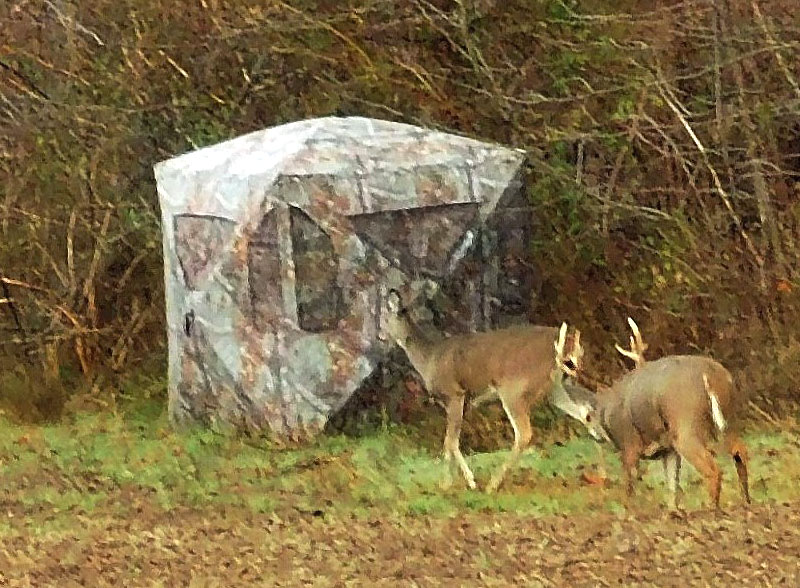 Tired of sitting in treestands? Want more of a challenge? Try ground blinds set up near trails and feeding area, because they can be deadly effective. I photographed this rutting buck last November as he dogged a doe past one of my blinds. I'd passed him up from treestands on earlier hunts. Hope to see him at ground level next fall.