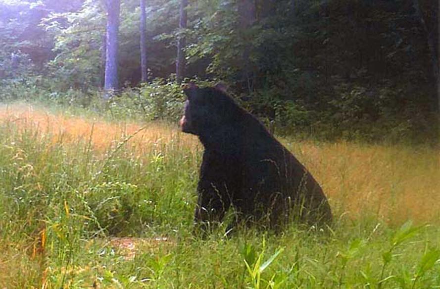 This bear had no idea he was on camera.