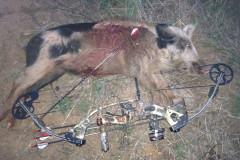 Hog Hunting to Improve Your Deer Hunting Skills