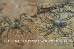 Top 10 Deadliest Animals in Australia