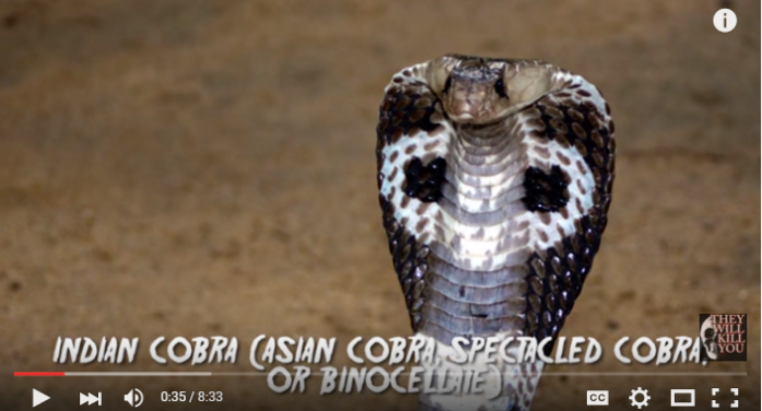 The 5 Deadliest Snakes in Asia