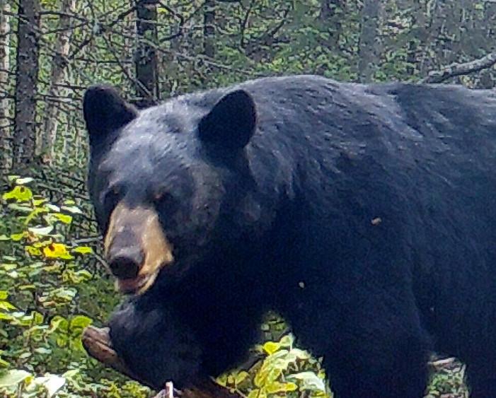 Last Bearhunt: My Hunt, Part 2