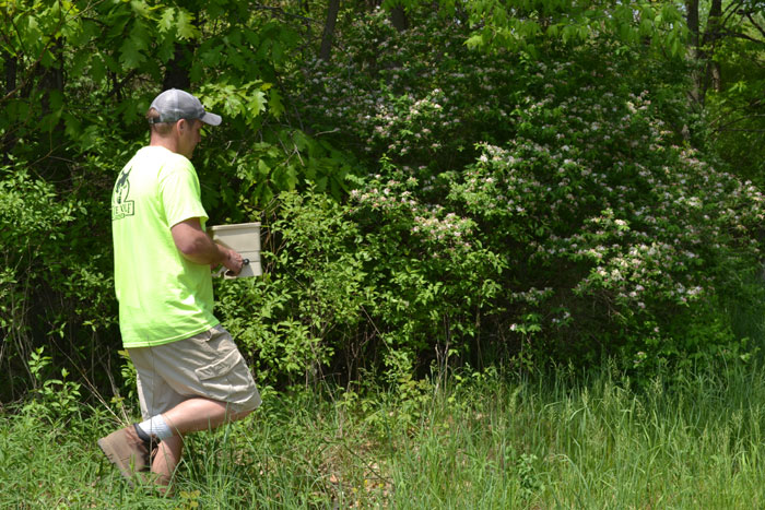 Author fertilizing native weeds.