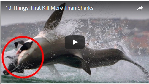 Top '10' Things That Kill More Than Sharks