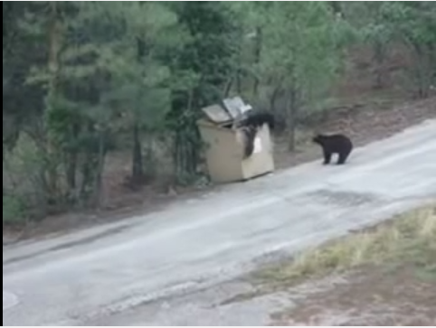 Bear Cubs Saved From Dumpster