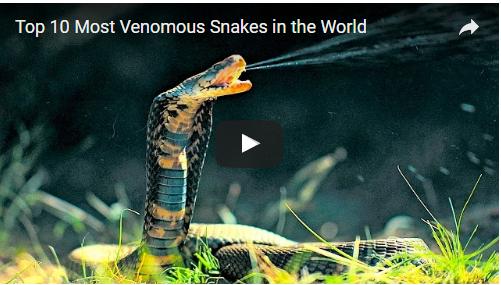 Top '10' Most Venomous Snakes