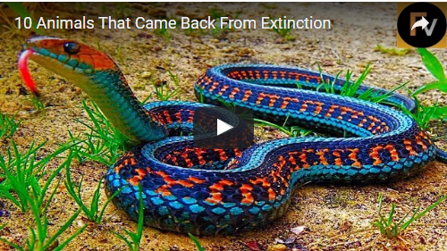 '10' Animals That Came Back from Extinction