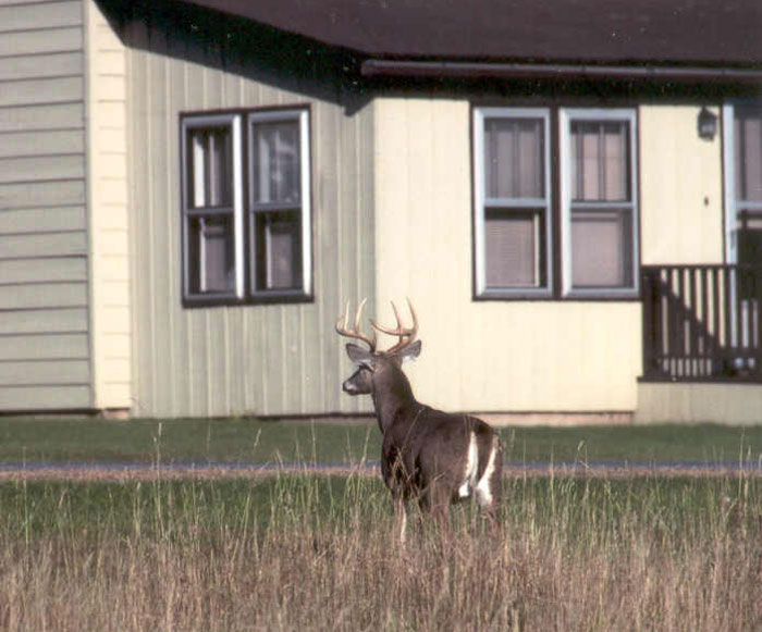 Staten Island officials believe they can capture and sterilize every buck on the island.