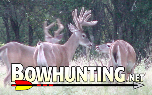 Write for Bowhunting.Net