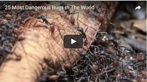 25 Most Dangerous Bugs