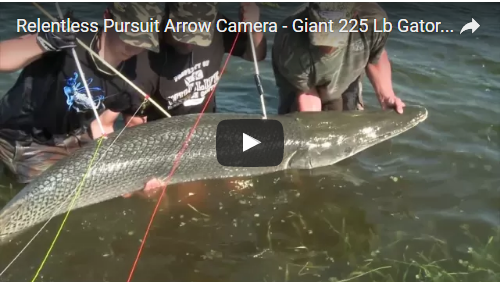 Bowfishing 225 lb Alligator Gar: Relentless Pursuit
