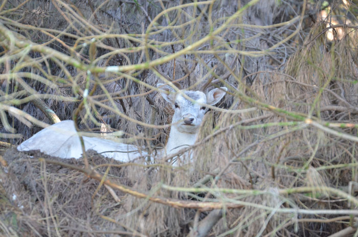 This fallow deer was nice enough to pose for a photo.