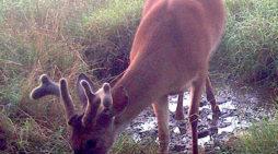 Deer And Water, Part 1: The Hidden Spring