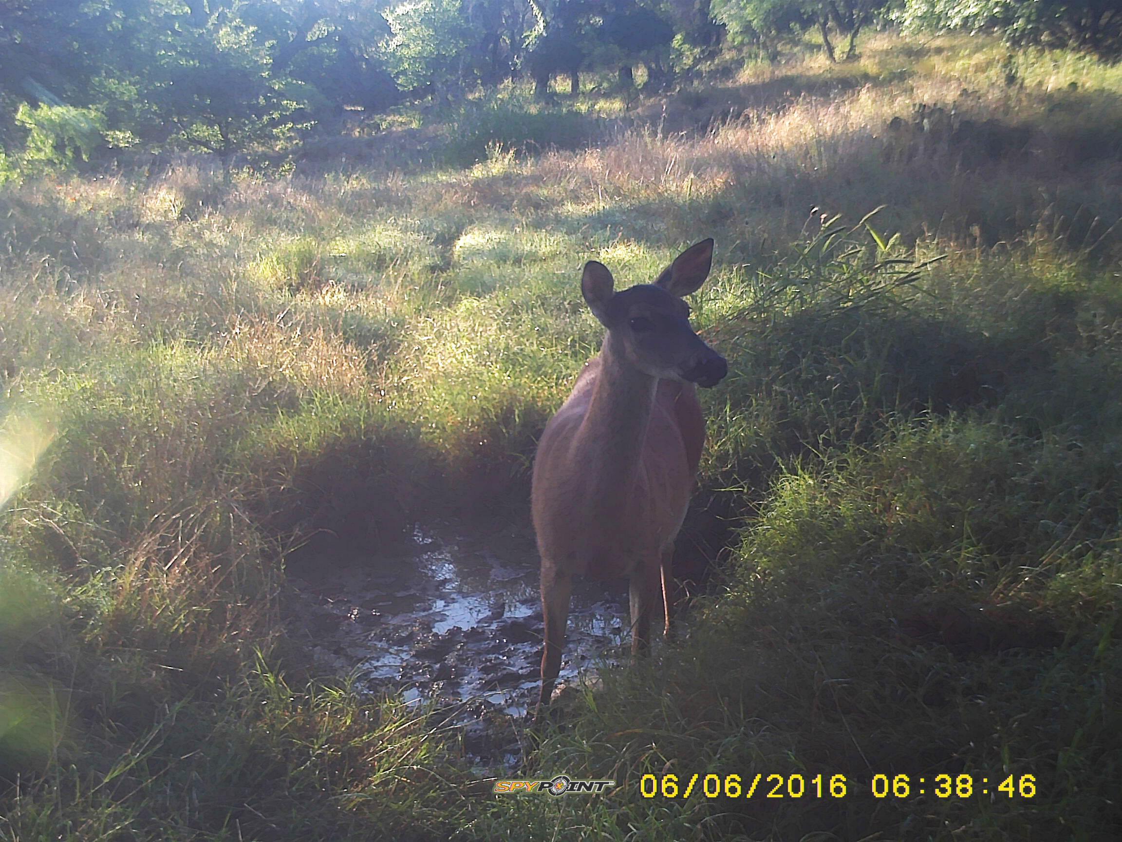 0-566-deer-low