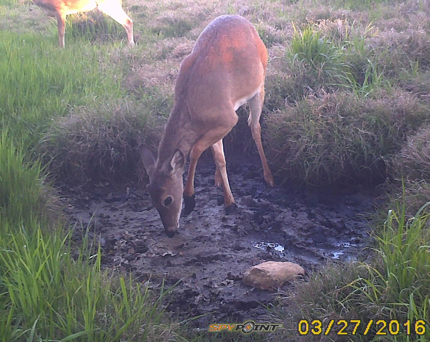 04-Buck-Antler-03