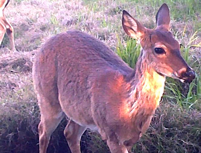 04-Buck-Antlers-CU
