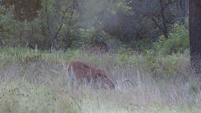 Some Deerhunters Fail Year After Year: Why?