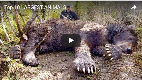 Top 10 Largest Animals