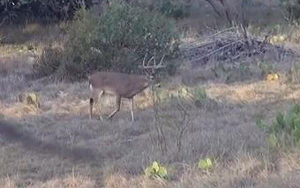 Camo Clan TV: The Muy Grande Buck