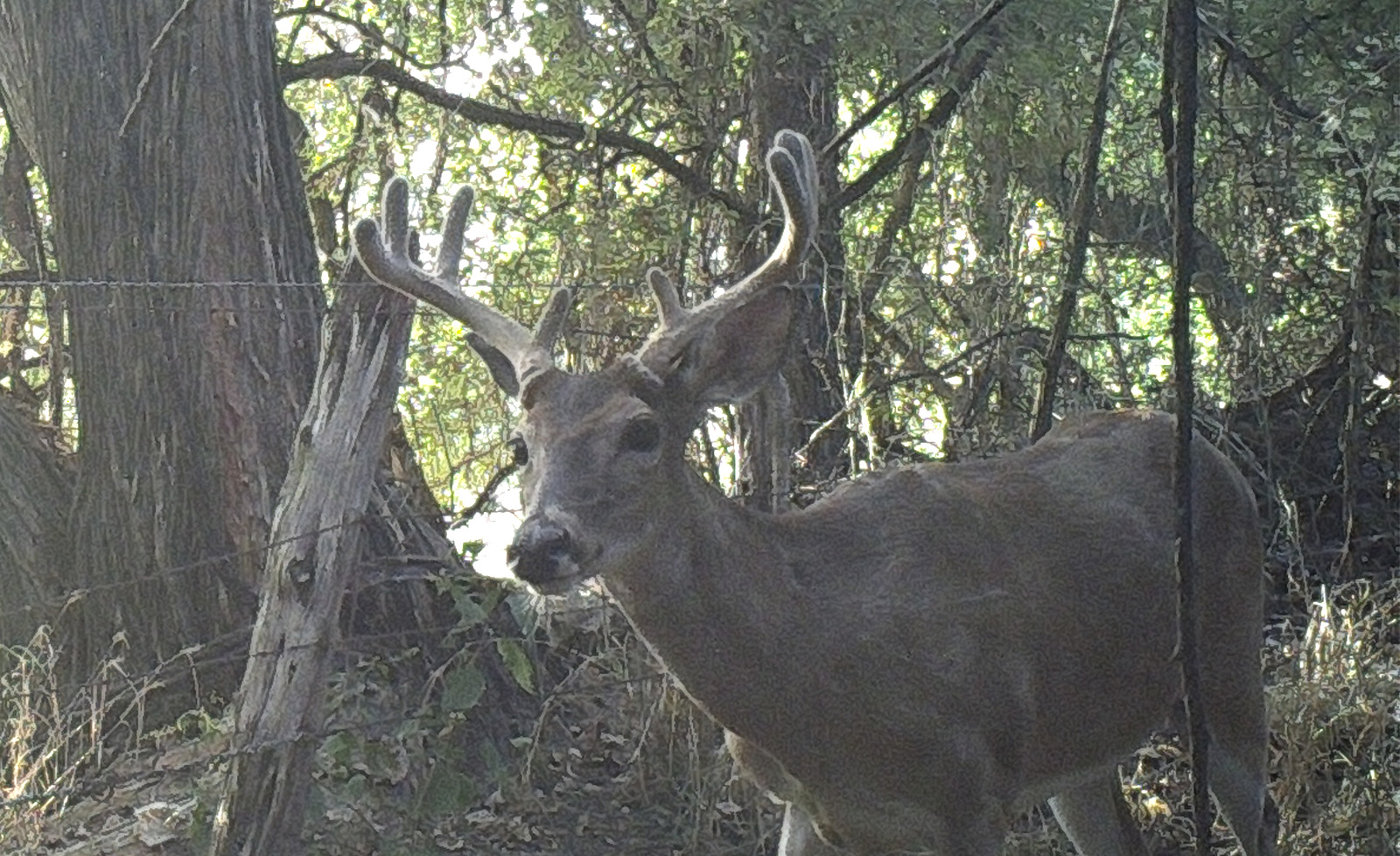 Project Game Cameras: Point Fast