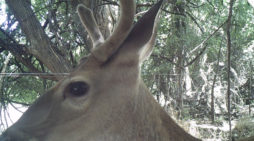 Project Game Cameras: Basic Pointers