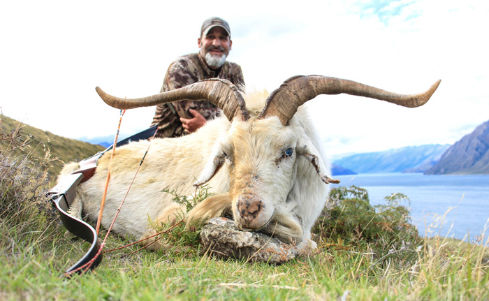 Bowhunting South Pacific Goat