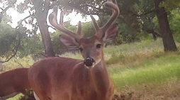 Scouting Deer 2016: Early July
