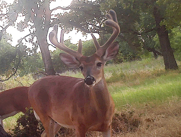 Scouting Deer 2016: Early July
