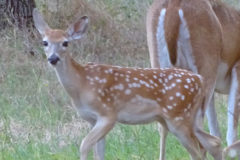 A Great Fawn Day