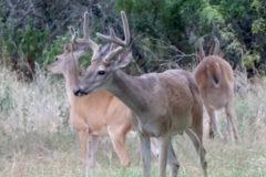 August Deer News