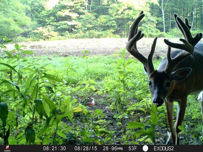 Jimtown Outfitters sends trail camera photos throughout the summer months.