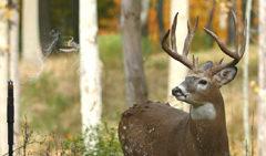 Fourth Arrow Revolutionizes Deer Scent with Wyndscent