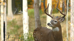 Fourth Arrow Revolutionizes Deer Scent with Wyndscent