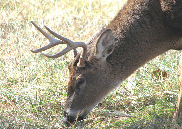 A home range must supply a buck with cover/security, food and water.
