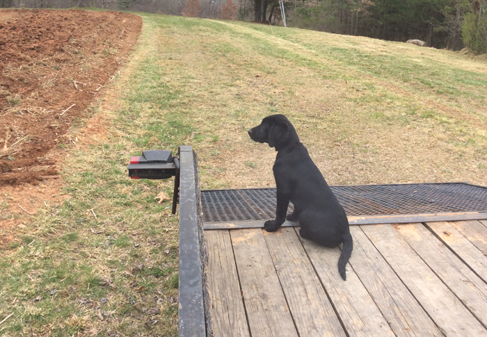 Sitting and patiently waiting to be releaaed is key for all dogs, especially retrievers that will spend plenty of time afield and in a blind.