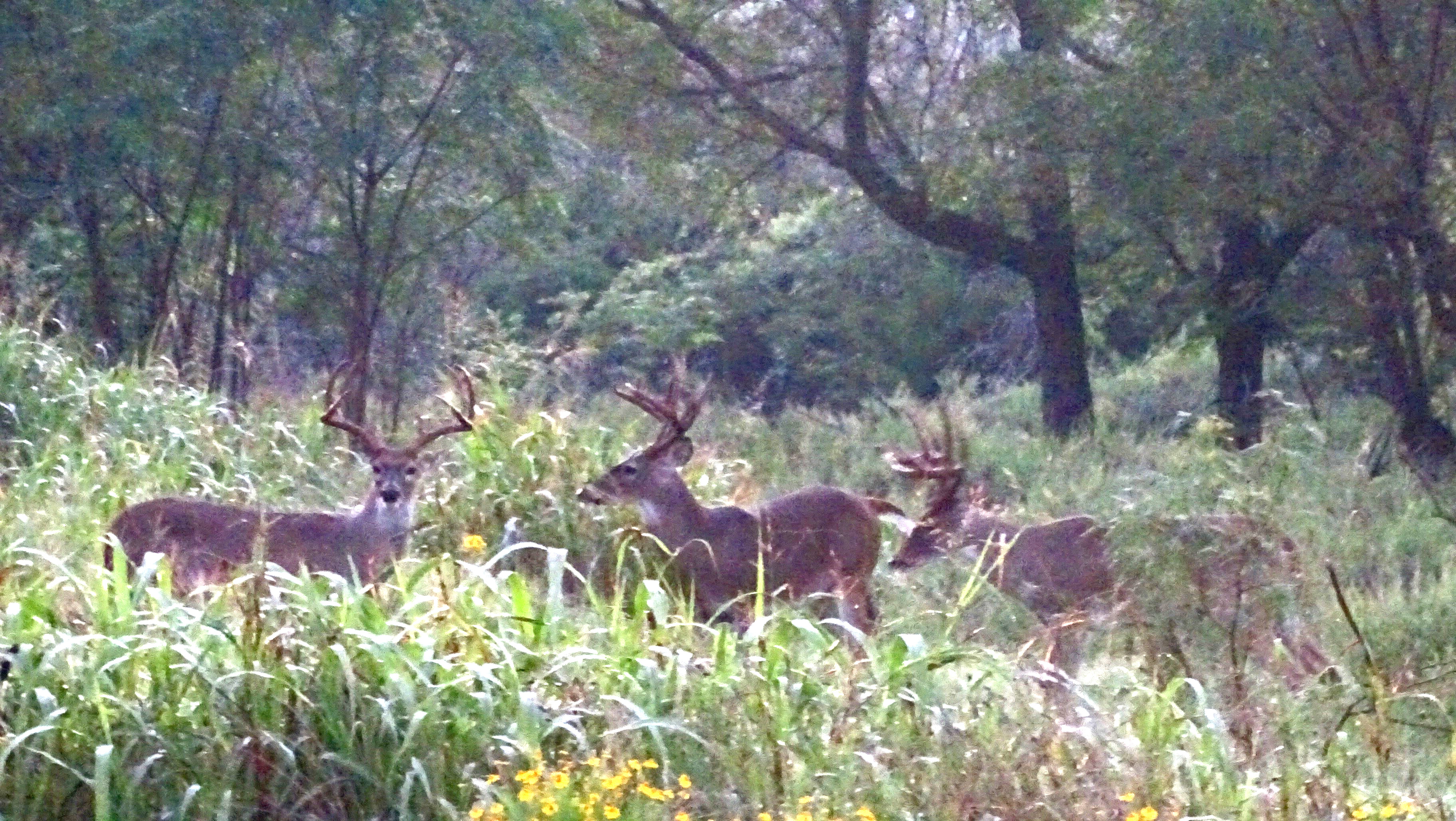 robert hoague whitetail deer pictures