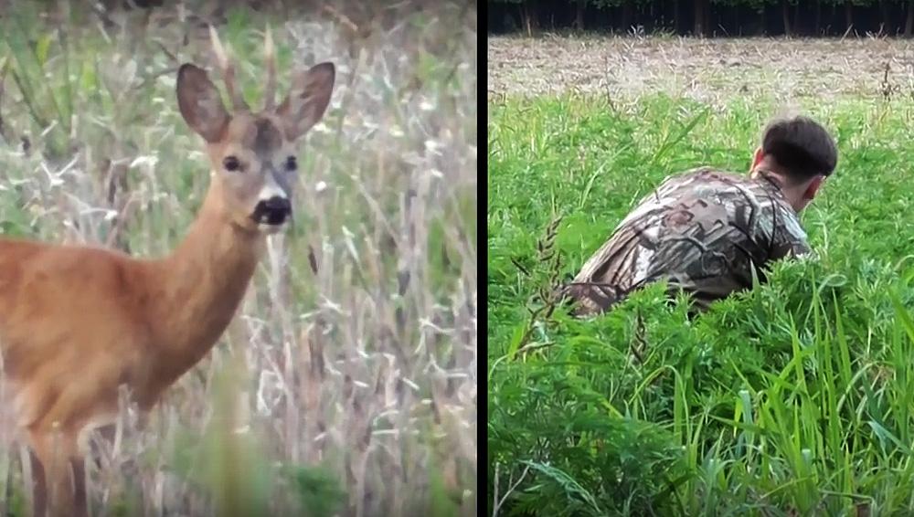 Wild Jaeger Hungarian Roe Deer Bowhunt
