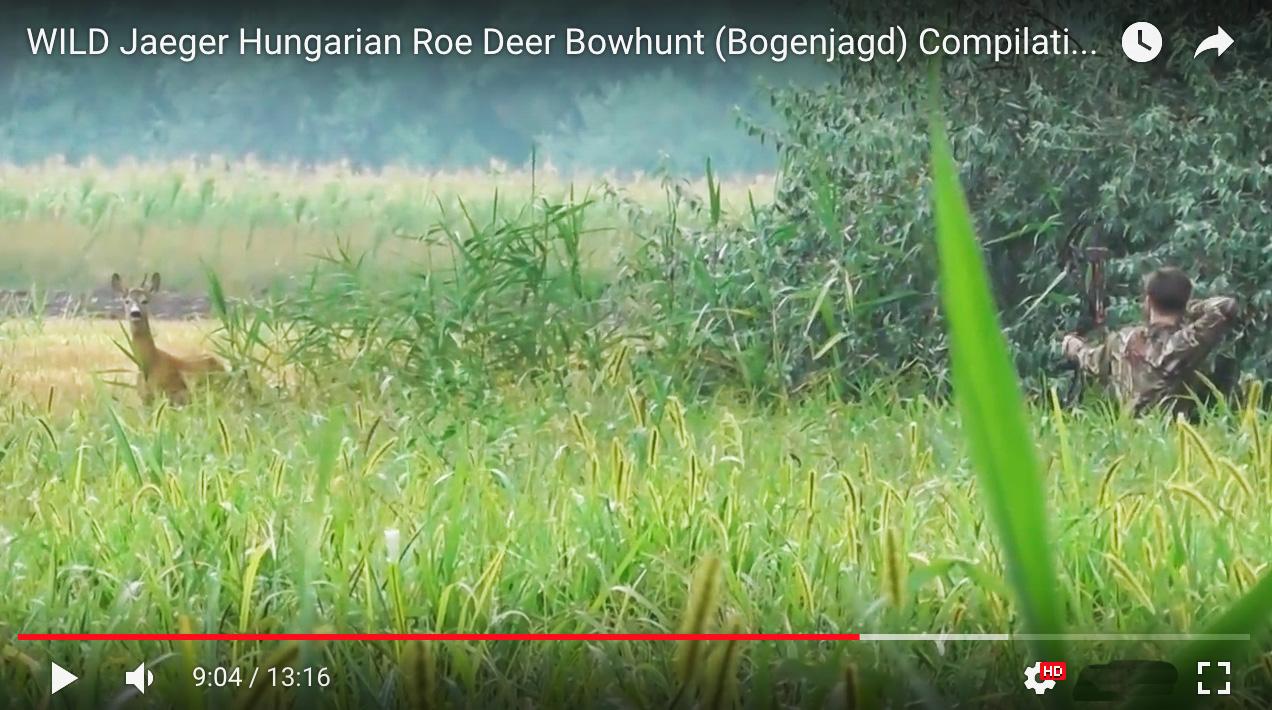 bowhunt wild jaeger roe deer