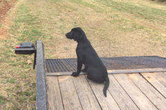 So You Want A Dog: Sit Pup!