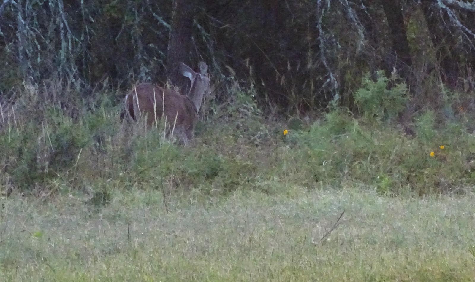 deer pictures by robert hoague