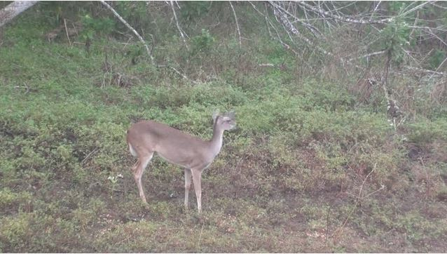 Bow kill with 10pt Footage