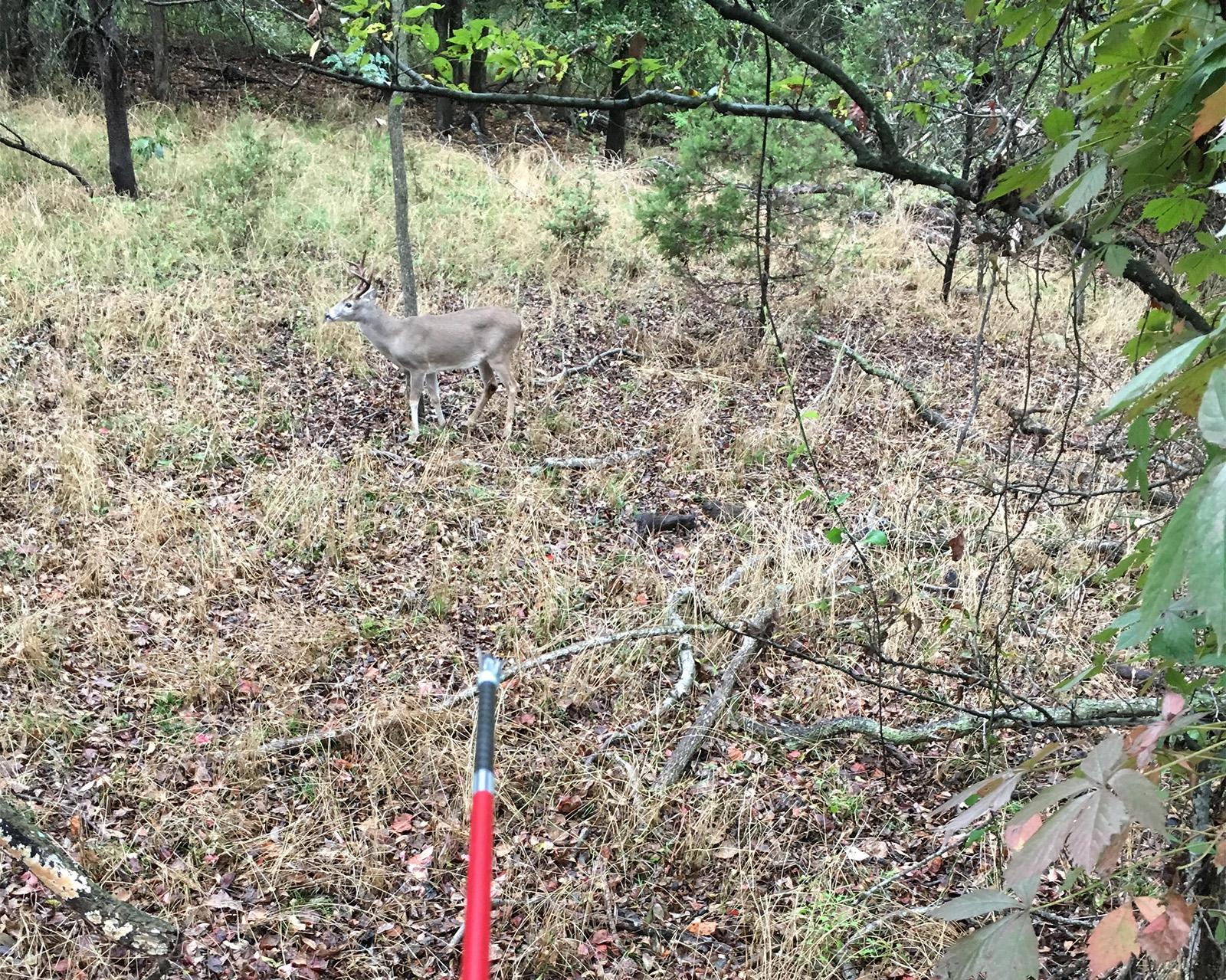treestand-youngbuck-arrow-1600