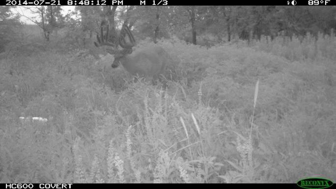 """We had 3 years of trail camera pictures of the Fish Hook Buck,"""