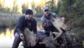 How To Challenge A Bull Moose Right To You