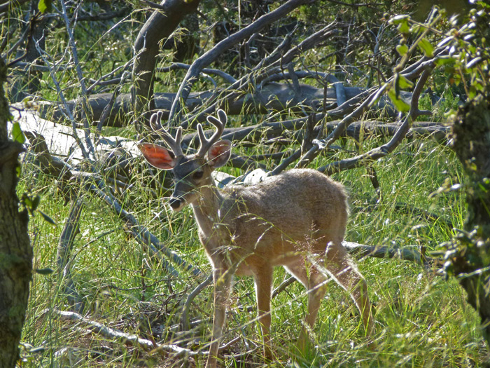The Smallest Whitetail: Part 1