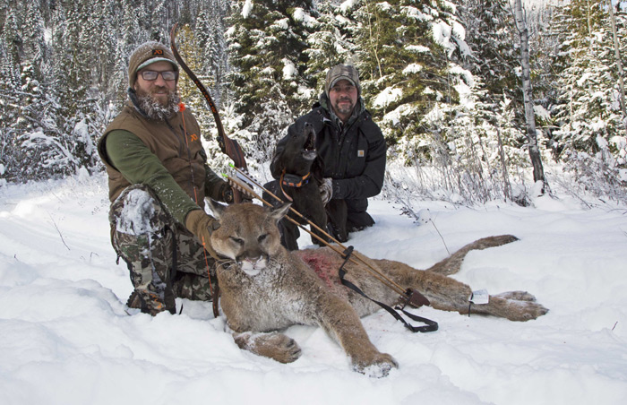 Mountain Lion the Traditional Way