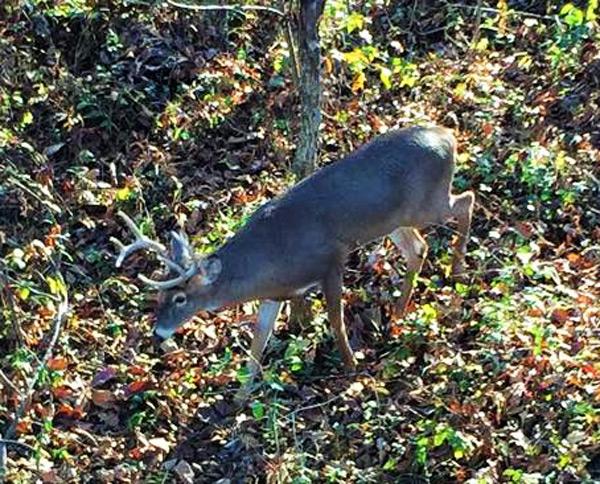One More Deer Season